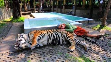 Tourist woman petting tiger. Chiang Mai, Thailand — Stock Video