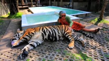 Woman petting a tiger — Stock Video