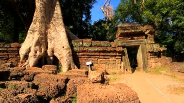 Tourists visit Ta Prohm Temple — Stock Video