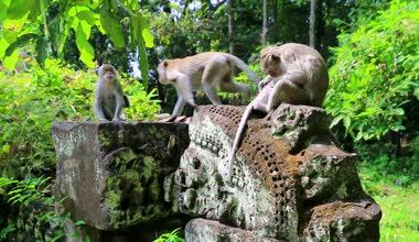 Monkey family in jungle — Stock Video