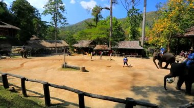 Elephants playing football — Vídeo Stock