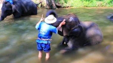 大象沐浴在这条河 — 图库视频影像