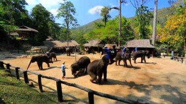 Elephant show — Stock Video