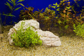 Plant in aquarium with fresh water — ストック写真