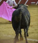 El Toro - Bullfigth corrida — Stock Photo
