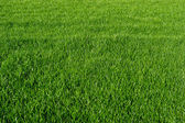 Grass-Top view-Background — Stock Photo