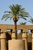 Egypt Palm in Temple of Karnak — Stock Photo