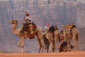 Camels in Wadi Rum, Jordan — Stock Photo