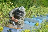 Bee Keeper Working with Bee Hives in a sunflower fiel — Stock Photo