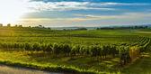Sunrise winnic - Winnica krajobraz Bordeaux — Zdjęcie stockowe