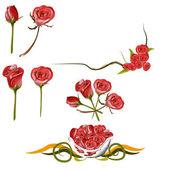 Collection of Rose — Vector de stock