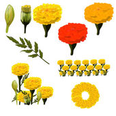 Marigold collection — Stock Vector