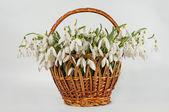 Cart spring flowers — Стоковое фото