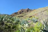 Volcanic Landscape on La Gomera — Stock Photo