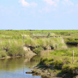 Creek on the Hallig Langeness in the Wadden Sea — Stock Photo #60186887