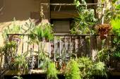 Flowers and plants on the balcony in the district Ravel in Barcelona — ストック写真