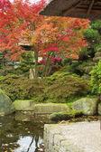 Autumnal Japanese garden in Hamburg — Stock Photo