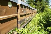Beekeeping in Upper Austria — Zdjęcie stockowe