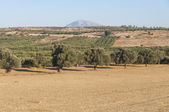 Fields and Olive Grooves on the way to Matala — Stock Photo