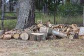 Woodpile of oak lumber — Stock Photo