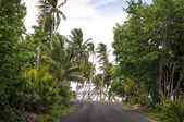 Tropical Road — Stock Photo