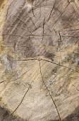 Tronchi d'albero e deforestazione foresta abbattuto — Foto Stock