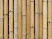 Bamboo fence background texture pattern — Stock Photo