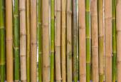 Green bamboo fence background texture pattern — Stock Photo