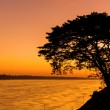 Beautiful sunrise out with silhouetted of tree at Mekong river, — Stock Photo #59338127