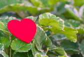 Red heart on green leaf with nature background — Stock Photo
