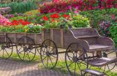 Colorful of petunia flowers on trolley or cart wooden in garden — Stock Photo
