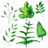 Vector watercolor illustration set — Stock Vector