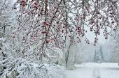 Snowfall in city park- winter background — Foto Stock