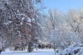 зимний пейзаж с снегом покрыты деревья — Стоковое фото