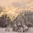 Magic Colors Of The Winter Evening. — Stock Photo #60447325