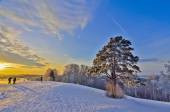 Lonely Pine in the golden rays of a winter sunset — Stock Photo