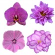 Set of four flowers isolated on white background — Stock Photo #64446129