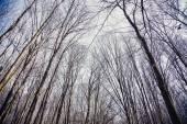 Texture sfondo, albero senza foglie contro il cielo — Foto Stock