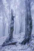 Foggy forest in winter — Stock Photo