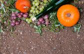 Autumn cocept — Stock Photo