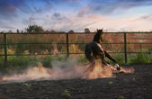 Horse in the dust — Stock Photo
