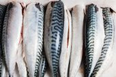 Cleaned and gutted mackerel — Stock Photo