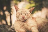 Katze schlafend auf Felsen im Garten — Stockfoto