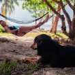 Woman relaxing in hammock with dog — Stock Photo #64684129