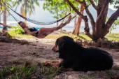 Woman relaxing in hammock with dog — Foto de Stock