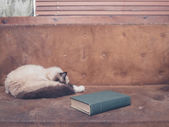 Cat and book on sofa — Stock Photo