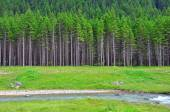 River and forest — Stock Photo