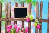 Garden fence and tulips — Stock Photo