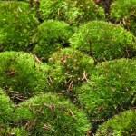 Moss background — Stock Photo #68704473
