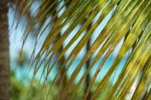 Closeup view of green palm leaf and ocean background — Stock Photo